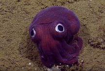 Art project: sea creatures