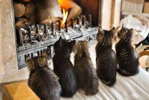 Furry Friends / Cute animals, animal care.