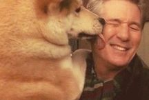 Hachi / I must make a bord from him beside Richard Gere