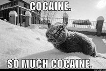 crrrraaazy cats