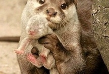 Little critters (: / by Jessica Creech