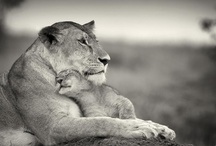 Mother and child / by Cindy Rahal