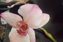 orchidea / orchidea in porcellana fredda