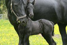 Μαύρα Άλογα