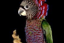 I Like All Kinds Of Birds...