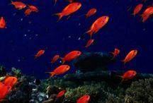 Ψαρια