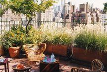 Terrace/ garden ideas