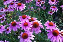 Flowers, Flowers, and more flowers! / Flowers from around the world