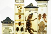 WunderKammer / Cabinet of Curiosites