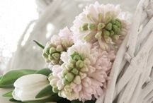 Цветы / изумительные букеты