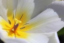 Flowers  / by Desiree Baez