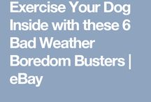 Exercise for pets