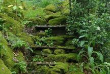 Senderos mágicos / algunos senderos parecen conducir a lugares menos terrenales