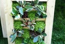 City Gardening