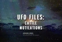 1.cattle mutilations 2.abductions 3.ufo sightseeing