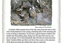 Rabbits 101   / This board contains Information about rabbit care.