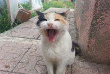 bahçemdeki kedilerim