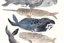 INSPIRE - Cetacea