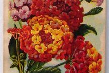Vintage seeds of flowers
