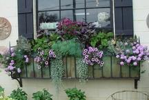 garden delights / by susie vereen