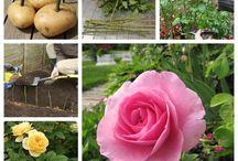 Förökning / Blommor