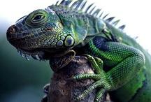 Bugs, Aracnids & Reptiles / by Karen Melo