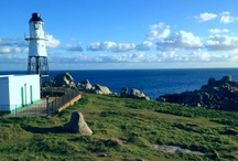 A Day in the Life of Scented Narcissi  / All the things we see and do on the Isles of Scilly