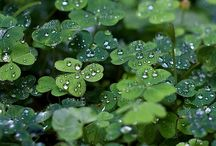 Lucky You! / Elisa Ilana St. Patty's Day Inspiration / by Elisa Ilana