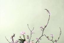 Blomster-Oppsatser