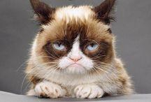 grumpy cat / I hate....everyone