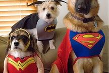 Lovable Canines / by Gwendolyn Barnhard