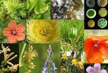 plant referance