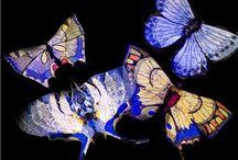 Foto farfalle - Ricamarte