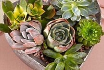 Flowery stuff / by Ann Randolph