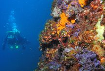 Diving Around the World / Check out the pictures we've collected from different sites all over the planet.