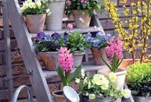 Gardening - Advices, Ideas,