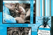 Cats and scrapbooking