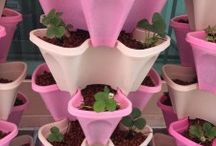 Aquaponics System / Aquaponics Farm is a sustainable growing way which can generate both fish and organic or chemical family or it can be part of feed a community.