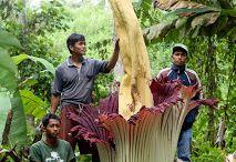 11 . Exotic Flowers & Plants Around  The World / by Lindawati Santosa