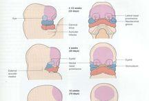 Embriology