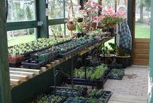 Ze Garden