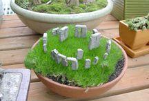 растения мини сады