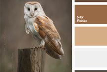 coloring palet