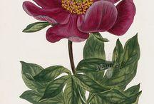 Botanical & Natural history