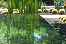 Landscape design & Plants