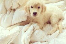 Fluffy Cuteness