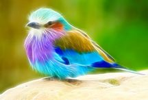 Colorful Birds / by Gwyn P