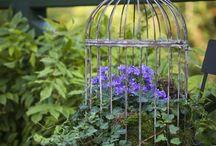 bird cage planters