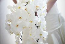 BEST  DAY  EVER B & K island style / Ideas for a romantic intimate island wedding  B &K