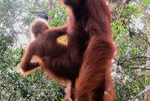 Govt develops ecotourism in Derawan, Tanjung Puting